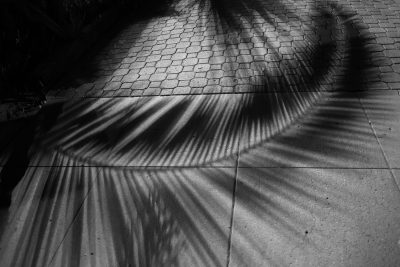 truth in shades of gray-palm
