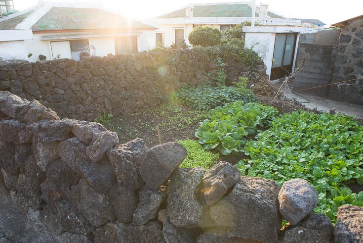 Jeju_volcanic_rock_garden