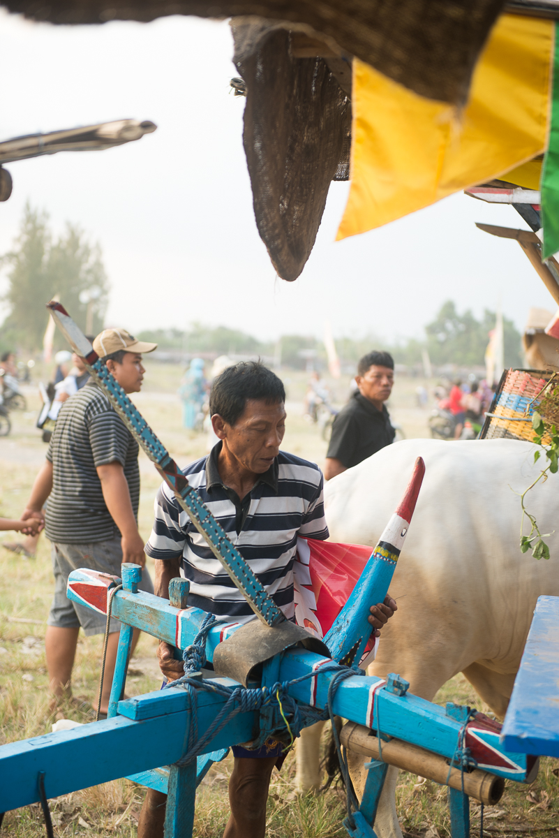 Man repositions cowcart at festival