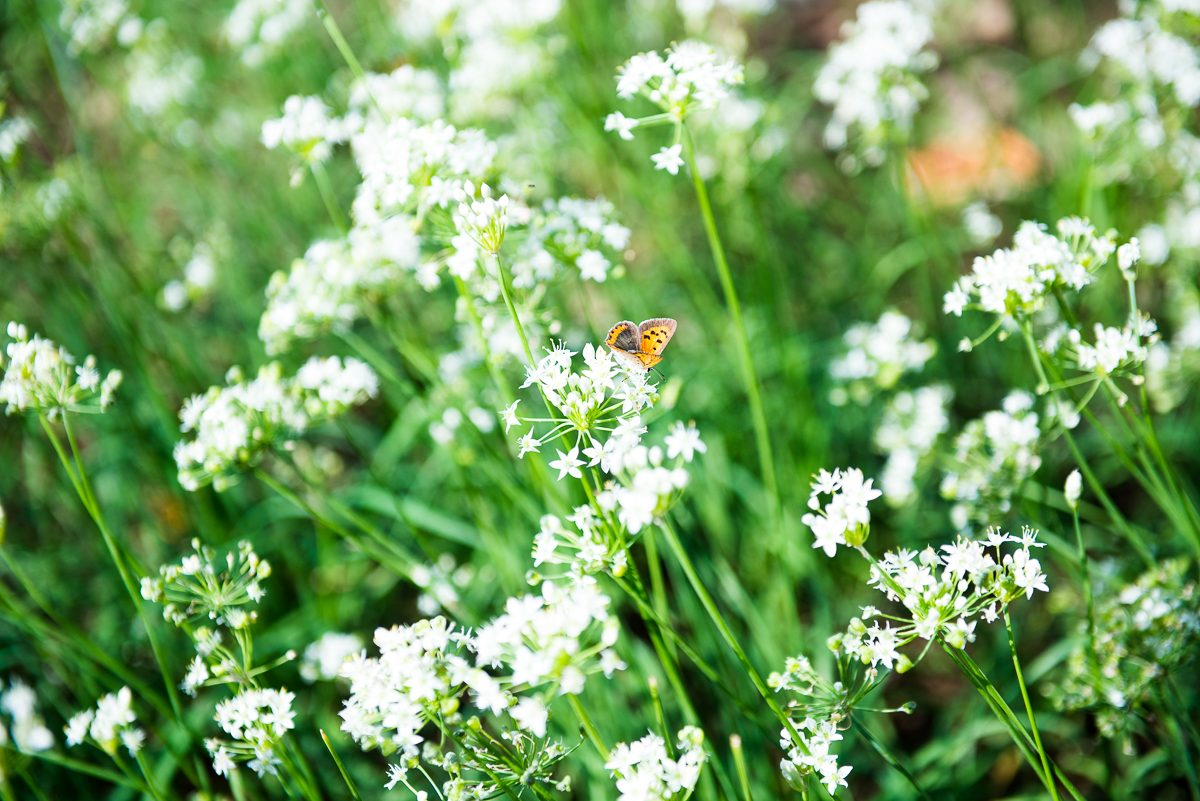 urban farming in Jeju and butterfly