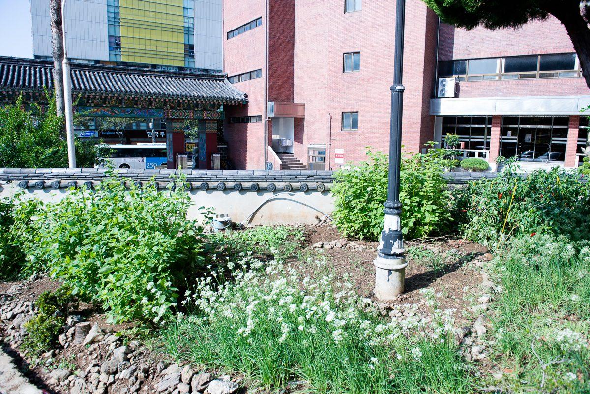urban farming in Jeju