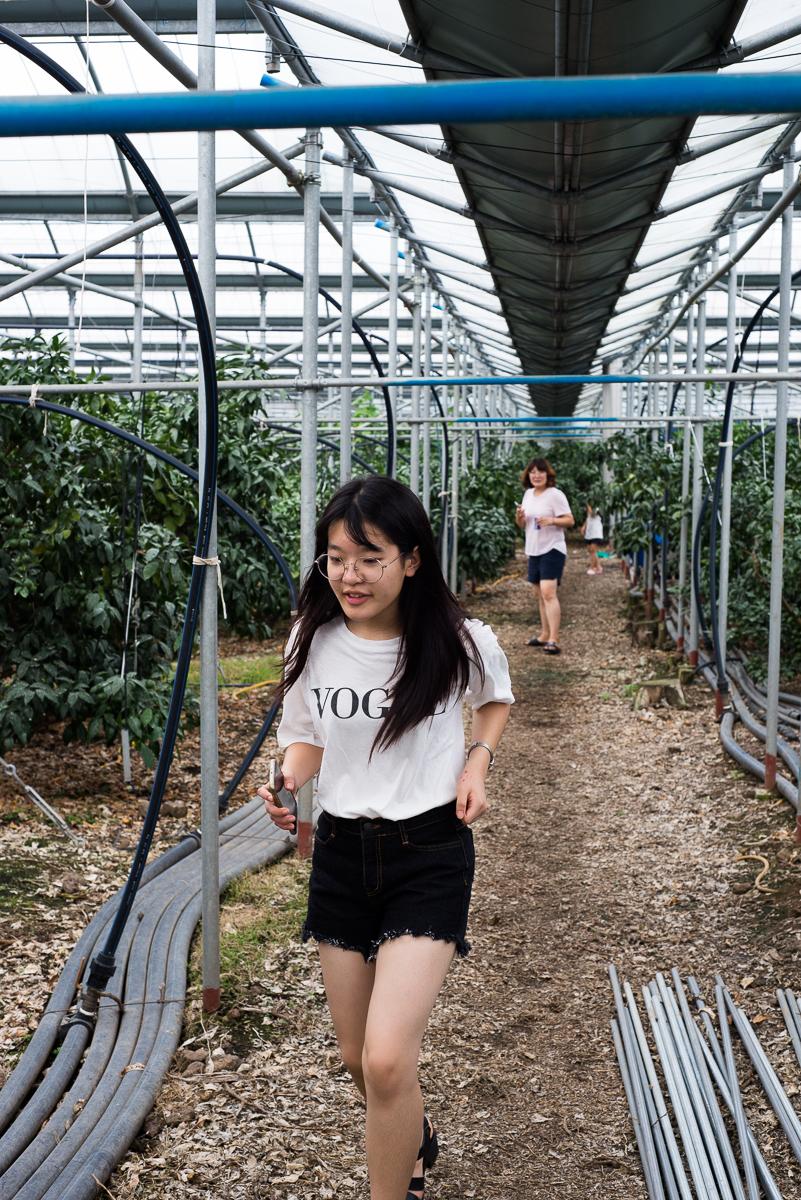 Jeju farm trip